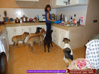 association-protection-animale-agadir-maroc-05