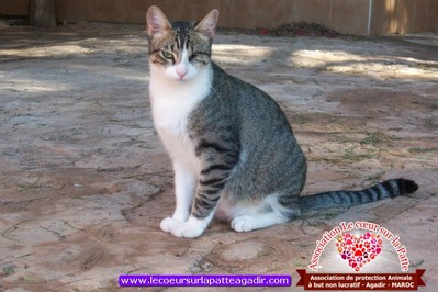association-protection-animale-agadir-maroc-03