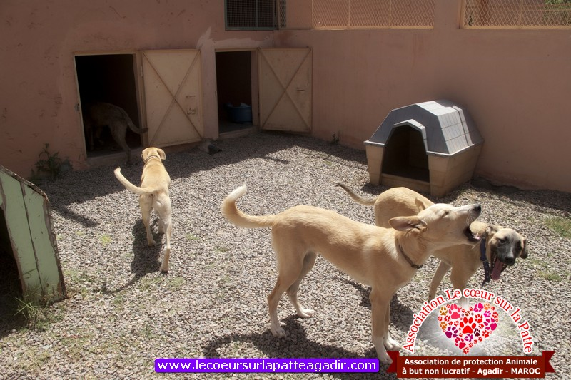 association-protection-animale-agadir-maroc-02