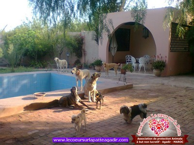 association-protection-animale-agadir-maroc-06