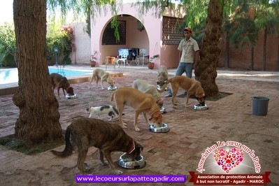 association-protection-animale-agadir-maroc-08